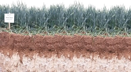 Влажност на почвата