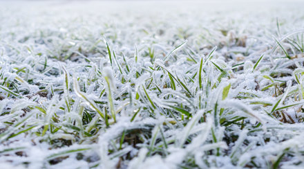 Frost, air temperature