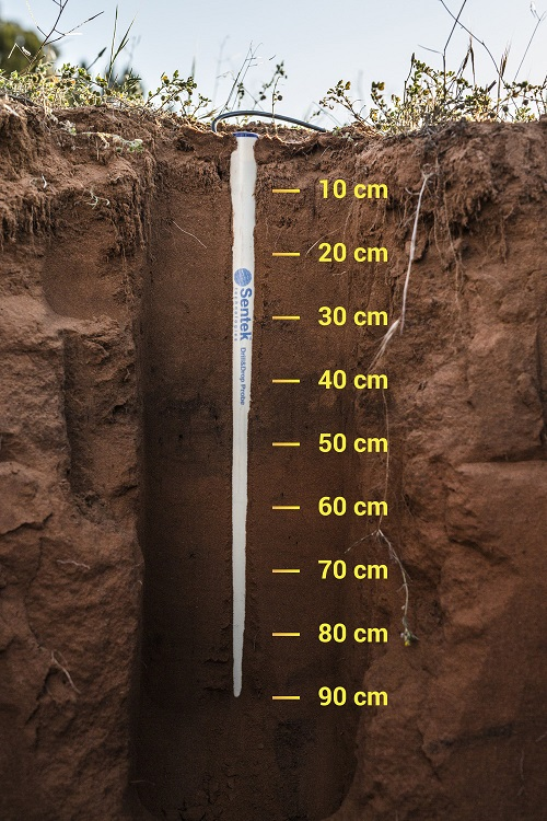Sentek sensors show the soil water content every 10 cm depth – at 10, 20, 30, … down to 120 cm